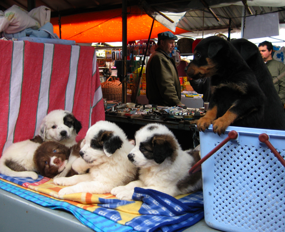 puppies_table.jpg