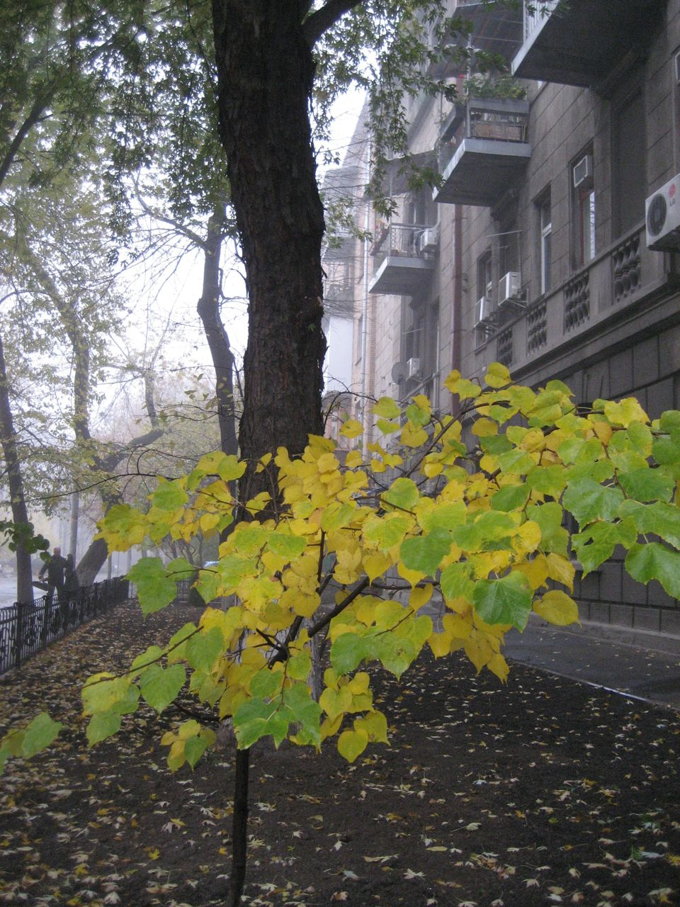 yellow_leaves_2.jpg